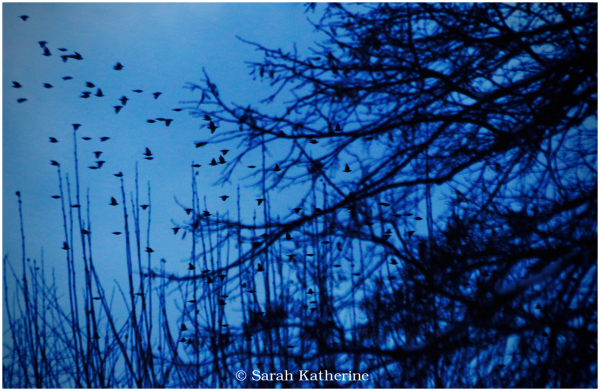 birds, winter, trees, dusk