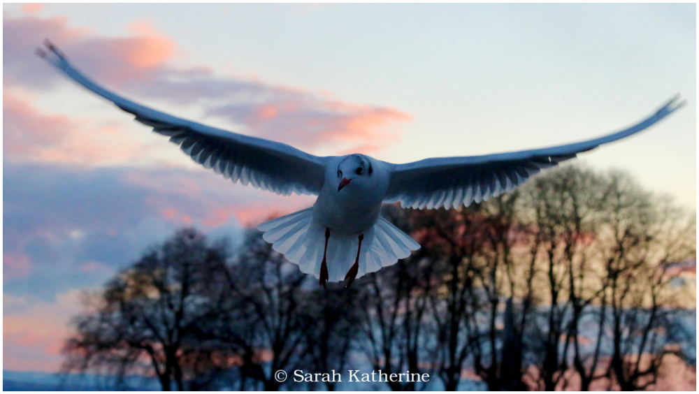 gull, winter, trees