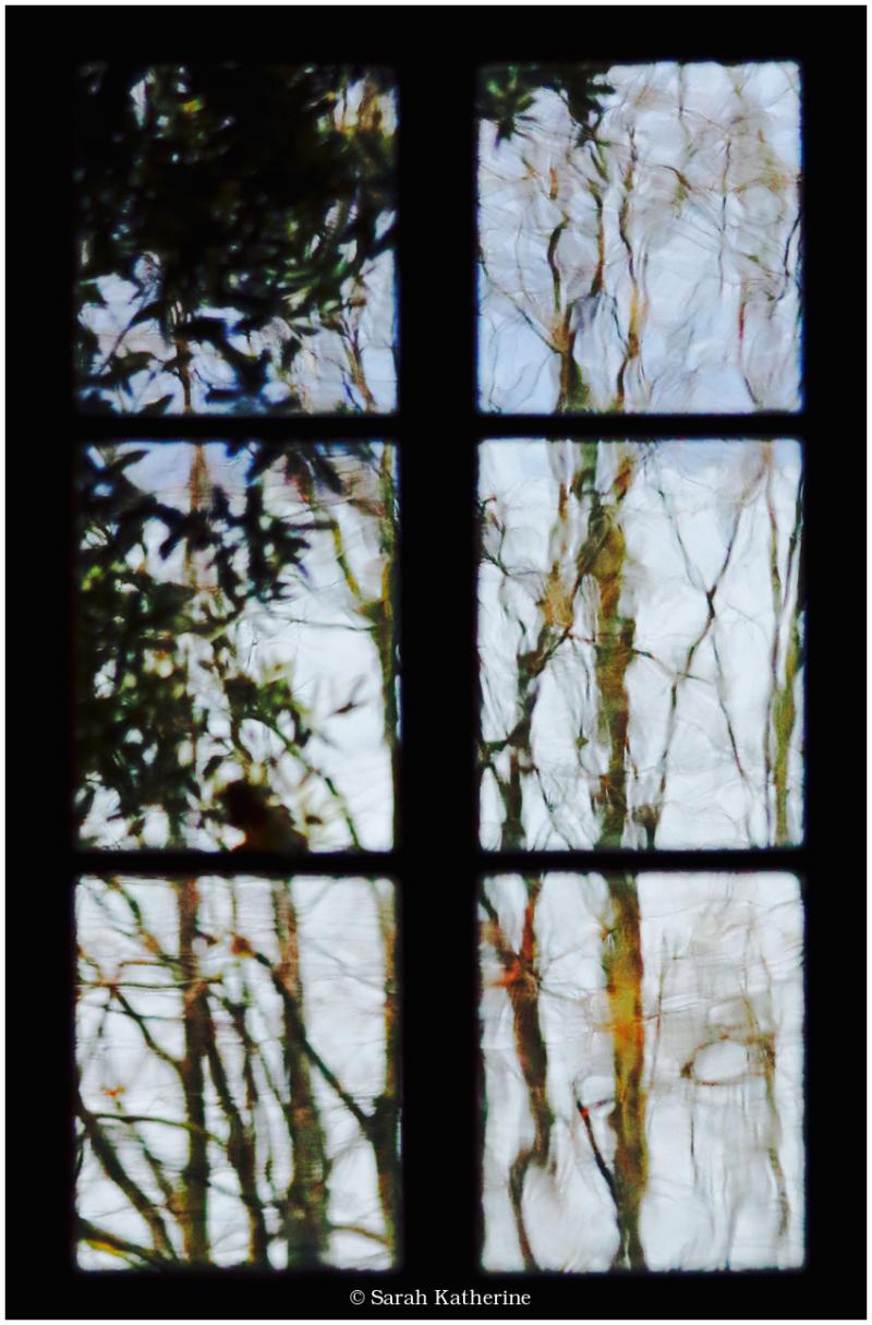 window, plants, lake
