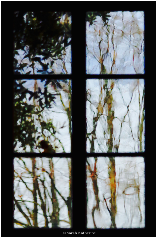 window, plants, lake