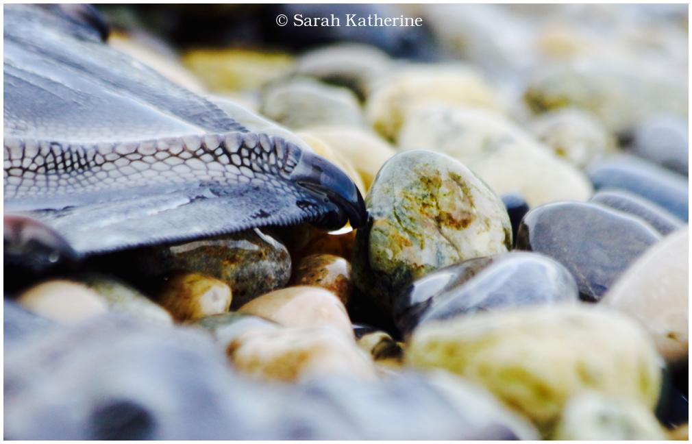 swan, foot, pebbles, lake