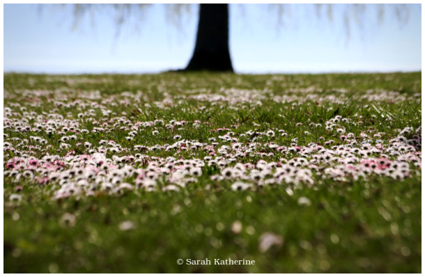 spring, grass, flowers, tree