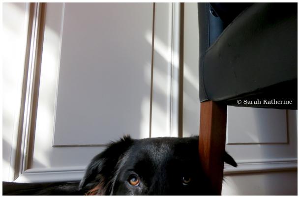 dog, heart, sun