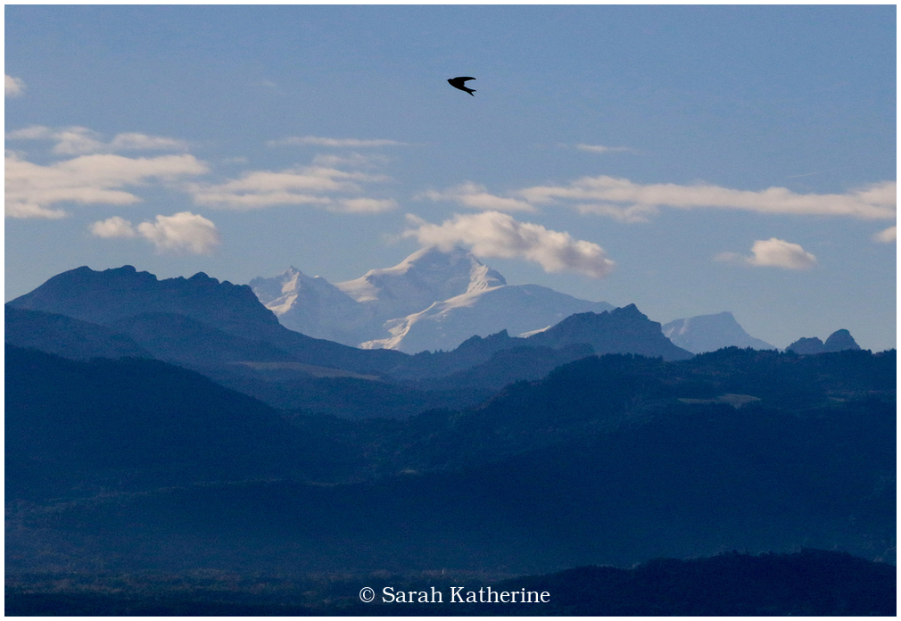 mont black, mountain, bird