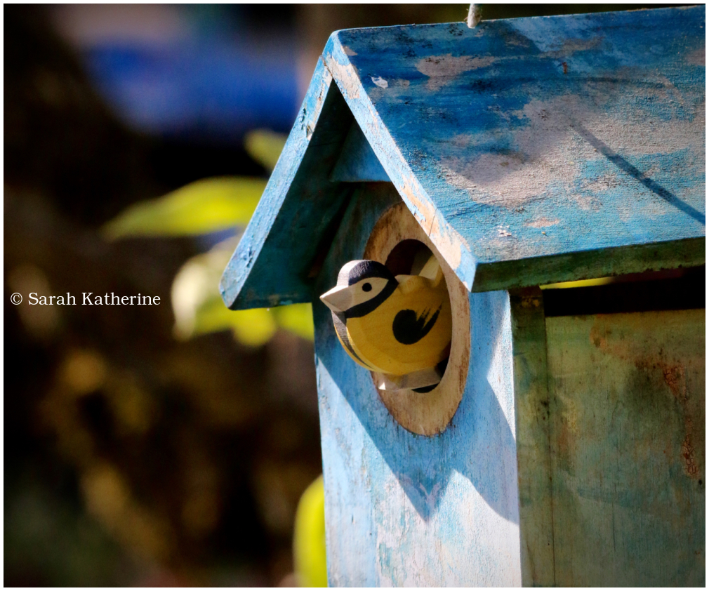 goldfinch, nesting box