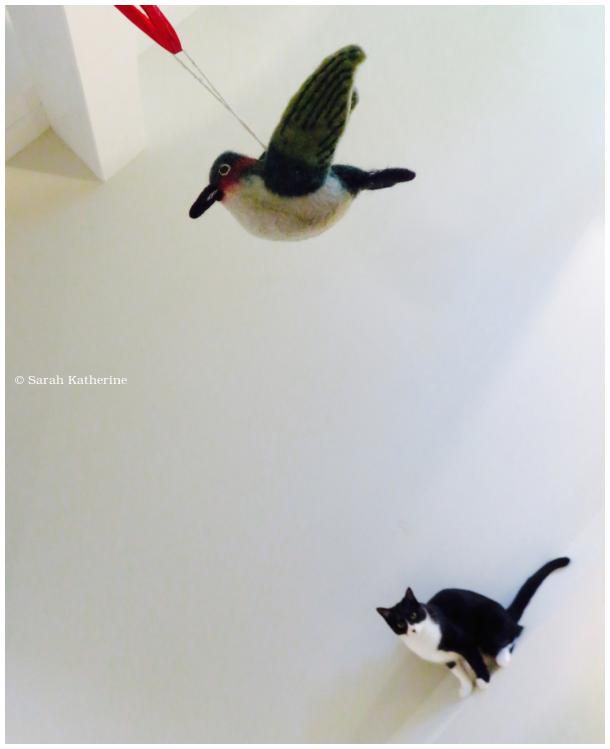 cat, bird