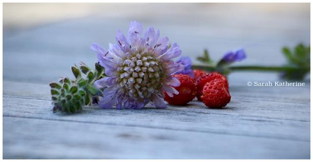 wildflowers, wild strawberries