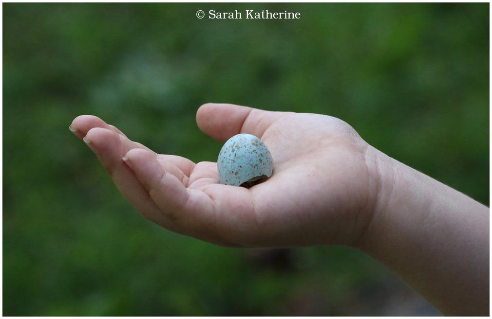 hand, egg, spring