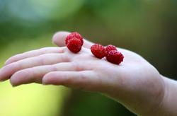 Little Garden Treasures