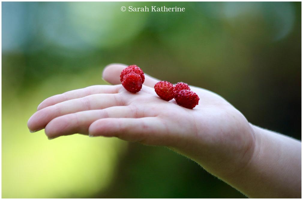 hand, wild strawberries, spring