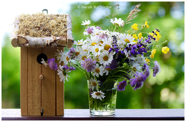 bird house, wildflowers, spring