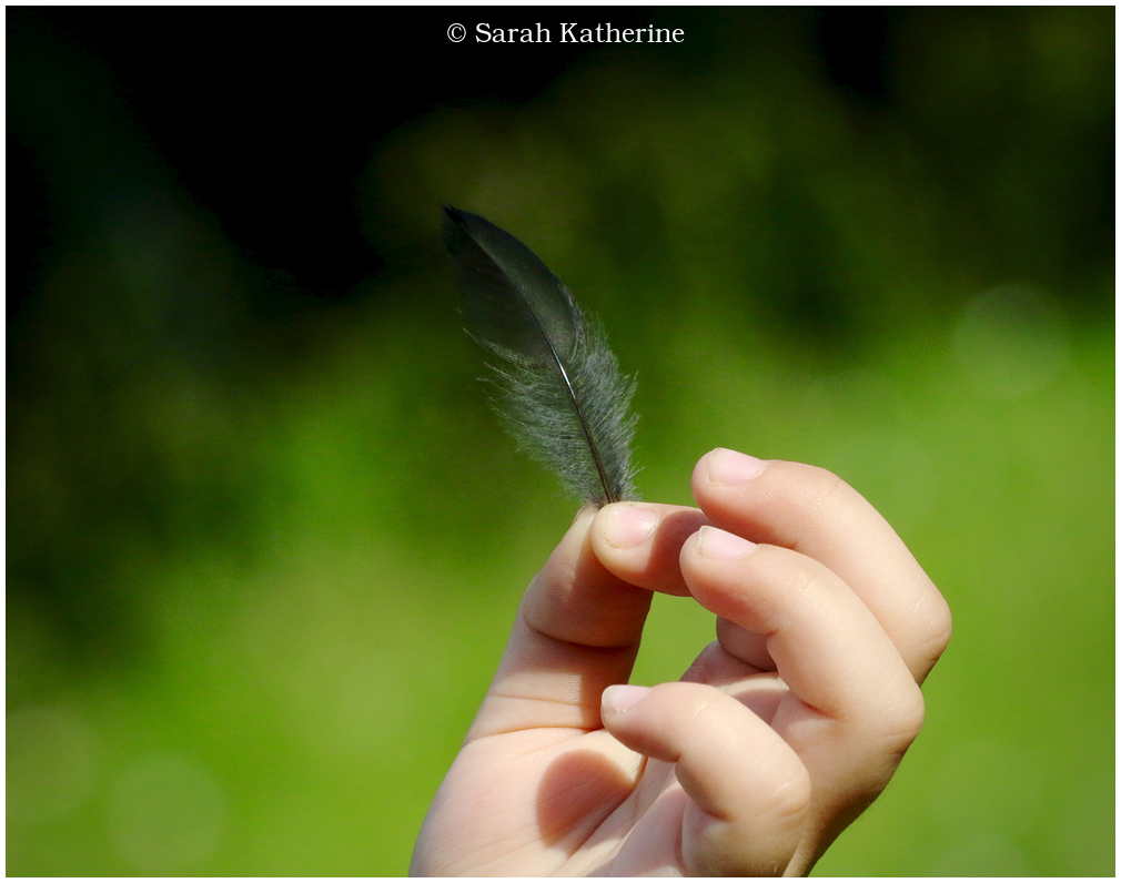 feather, hand