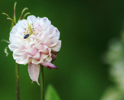 The Bug and Blossom