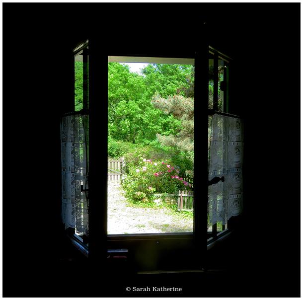 windows, garden, flowers, trees