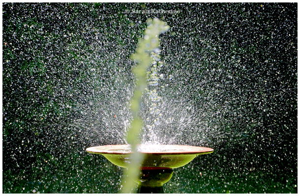 bird bath, water hose, water, sunlight