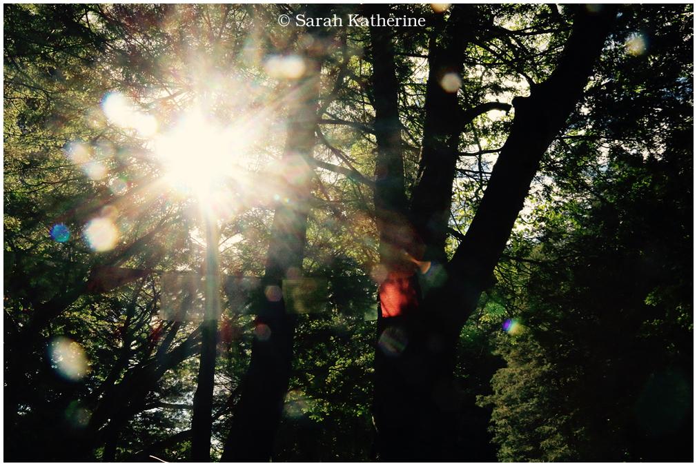 sunlight, trees, prayer flags