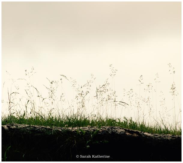 log, wild grass