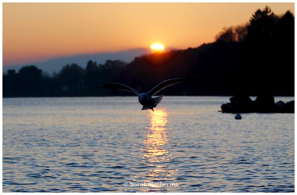 gull, sun, lake