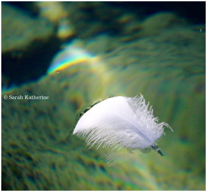 feather sunlight rainbow