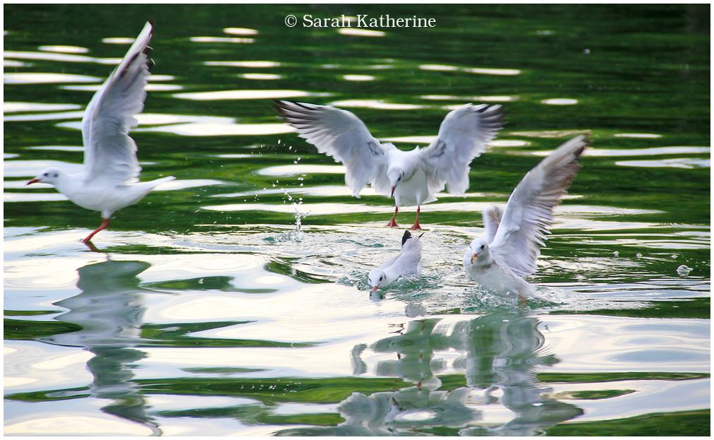 gulls water lake sunlight sparkles