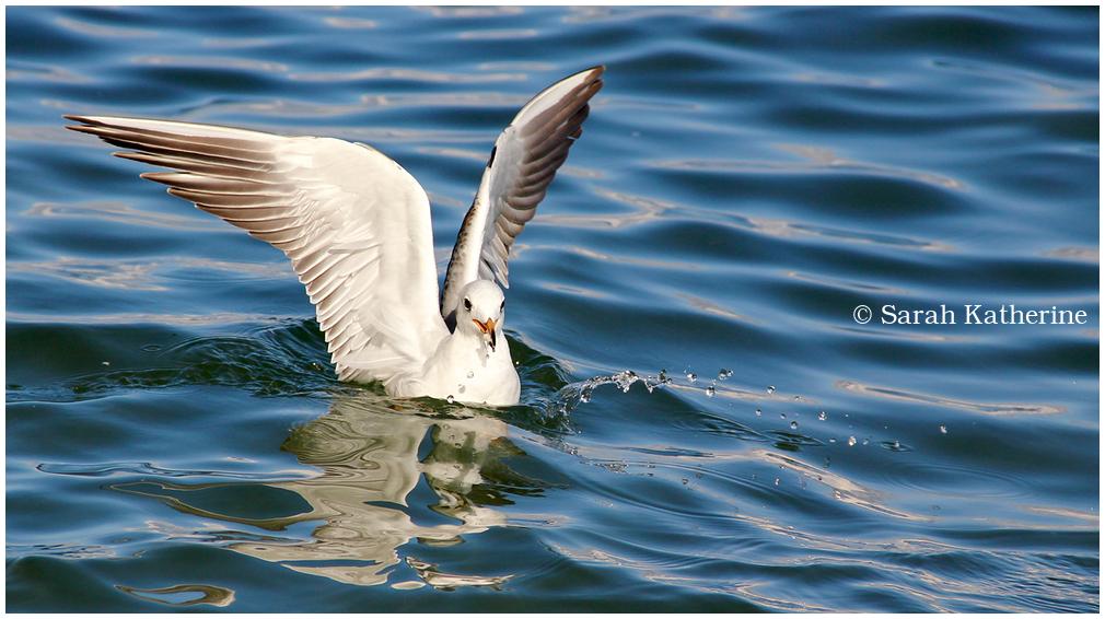 gull water lake