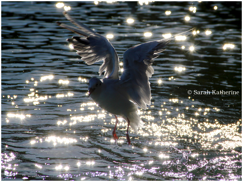 gull sunlight sparkles lake water