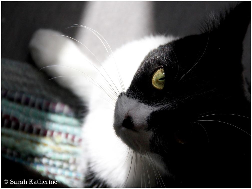 cat sunlight