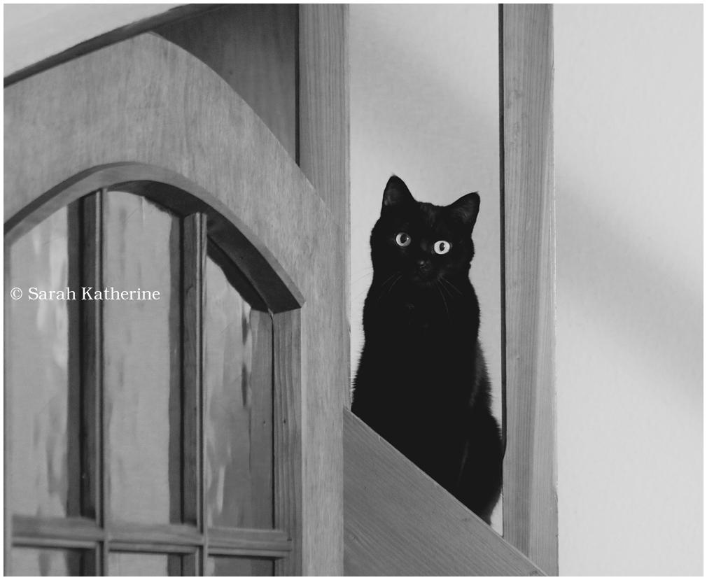 cat, stairs