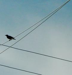 When Starlings Return