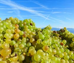 The Plentiful Harvest