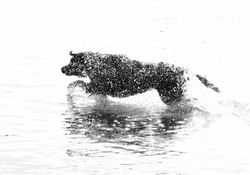 The Water Wolf