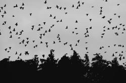 Forest Spirits Rising