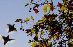 Autumnal Treasures