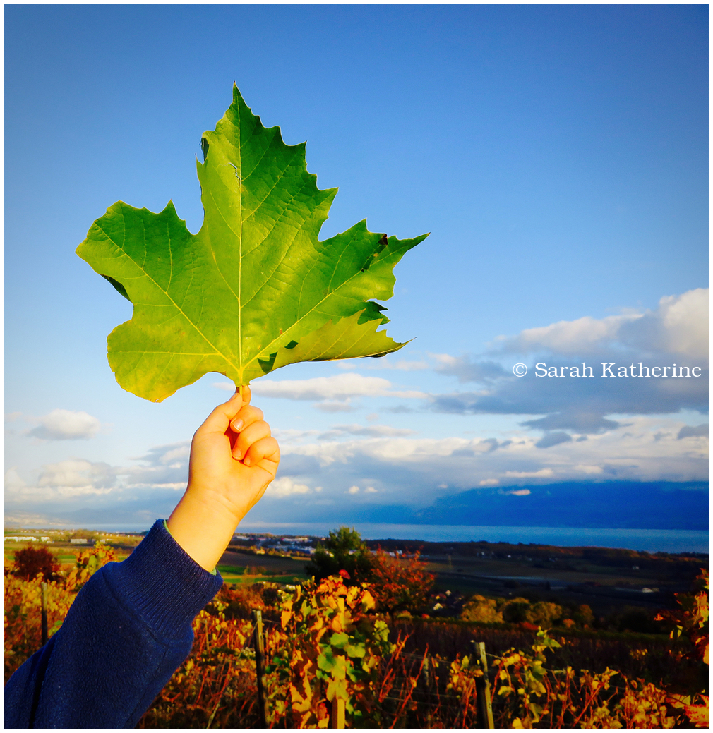 hand, leaf, lake, vineyards, autumn, clouds