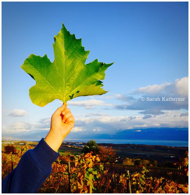 hand, leaf, lake, vineyards, autumn, clouds