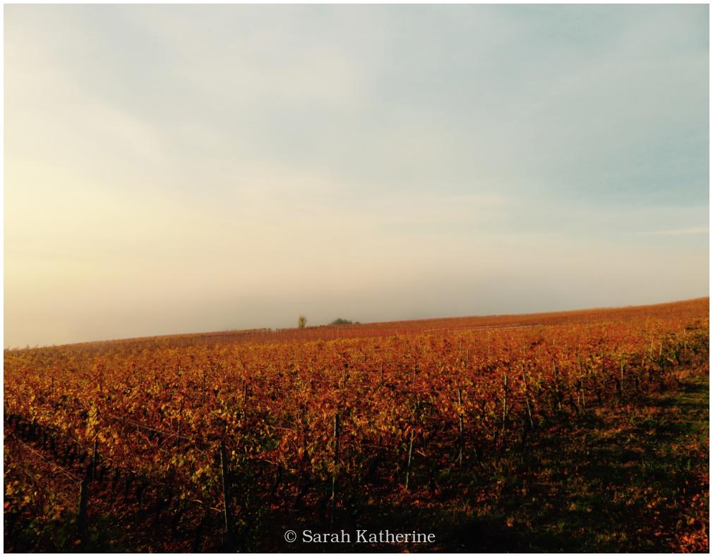 vines, autumn, fog