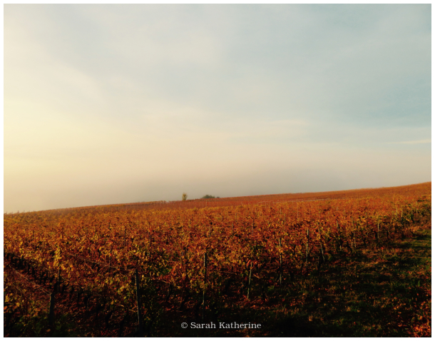 vines, autumn, fog