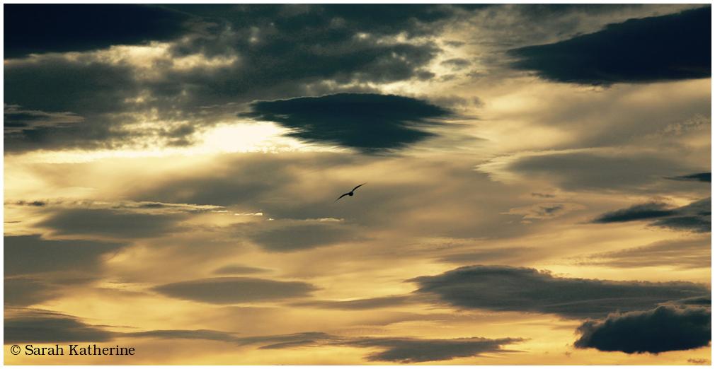 gull, autumn, sky, sunset