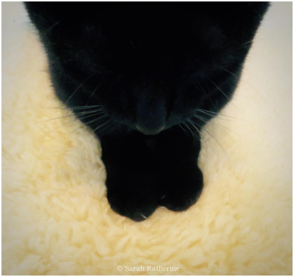 cat, lambskin, kundalini, kitty