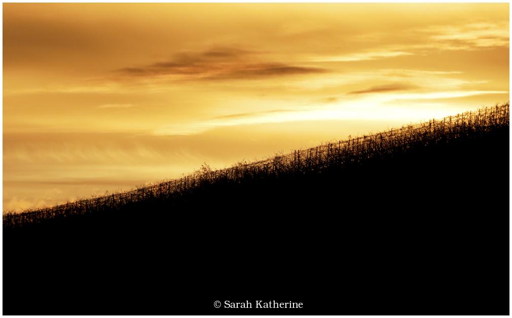 sunset vines autumn