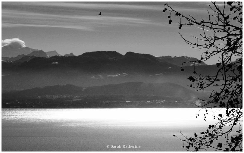 mont blanc, lake, crow, tree, autumn