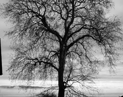 The Wintering Tree