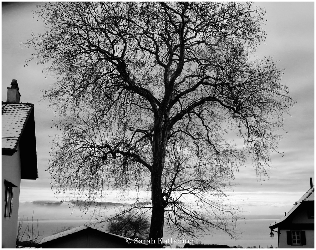 tree, winter, lake