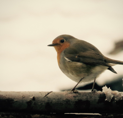 The Cherished Winter Guest