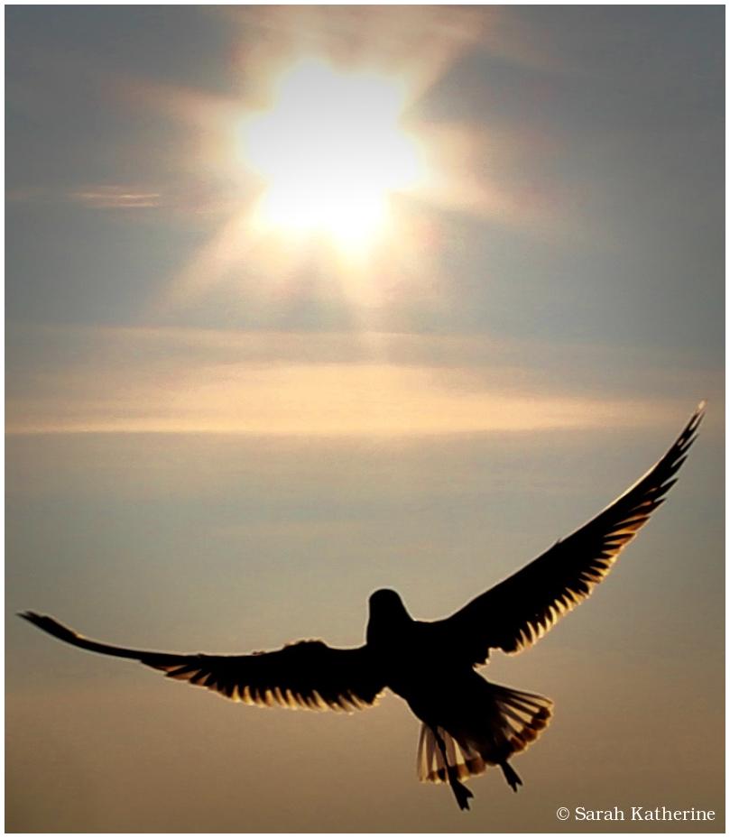gull, sun