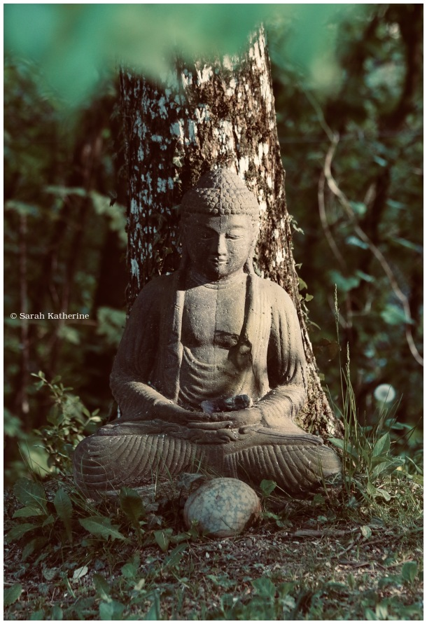 Buddha, tree, garden, spring, light