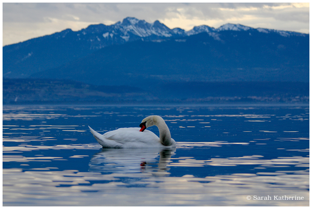 swan lake winter mountain