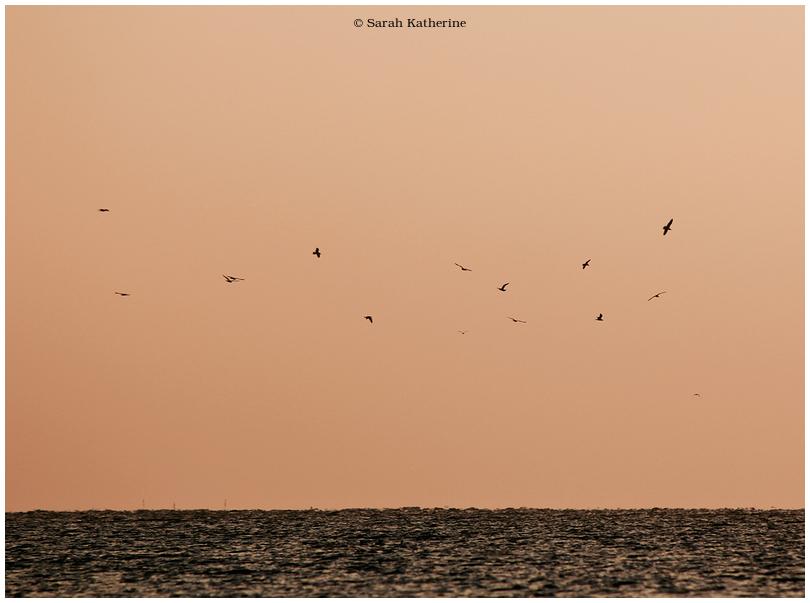 gulls, lake, sky