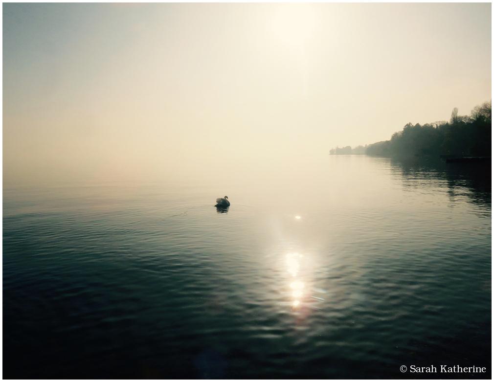 swan, lake, sun, trees