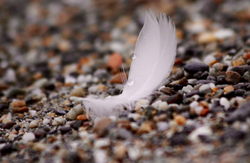 Pebbles and Peace